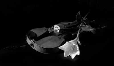 Foto Geige und Lilie - Trauerfallbegleitung Dr. Gesine Palmer